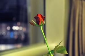 結婚記念日ということで、この席だけ赤い薔薇
