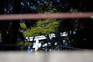 白幡神社の女坂の下から拝殿脇の鳥居を手摺の隙間から見上げる