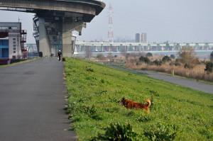 土手を登る犬