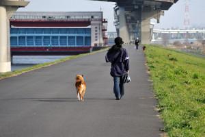 友達のように並んで歩く犬