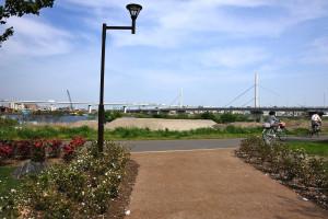 荒川土手に上がると首都高の荒川大橋が見えてきた