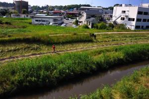 成田橋から根木名川を見下ろすと気持ちよさそうに歩く人を見かける