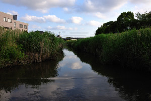 水面に近い小橋から根木名川上流を見る