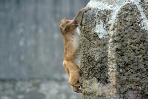 全身を伸ばして一気に登る