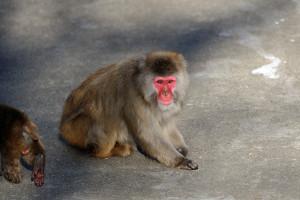こちらを見ながら微笑んでいるような猿