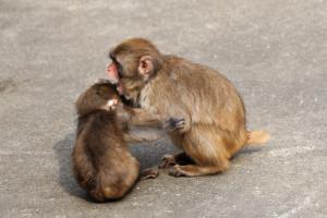 小猿を叱っているのかどうか