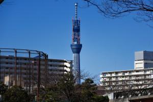 さくら大橋の手前から東京スカイツリーが見え始める