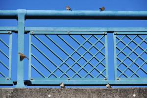 亀小橋の欄干に止まる雀