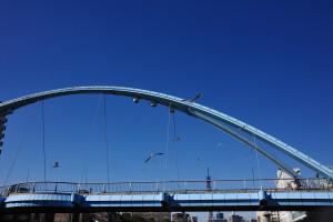 ふれあい橋の上を飛び交う百合鴎