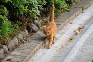 マイケル型猫