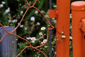 散歩の余所見:オレンジ色のフェンス