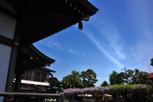高圓寺の藤