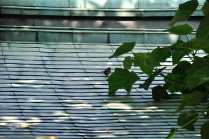 緑青屋根に雀