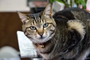 床屋さんの猫