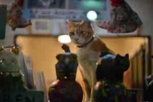 ギャラリーシュテルンの看板猫ララ