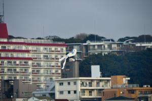 江戸川の凧