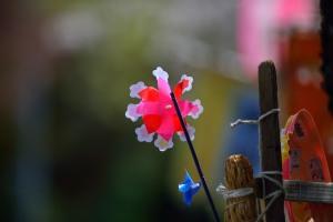 桜の風に回る風車