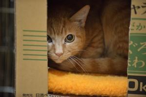 Shibamata cats house