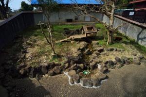 Lesser pandas Paddock