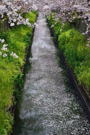 flower raft