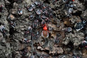 横綱assassin bug