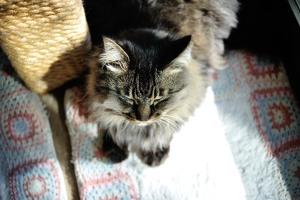 A sunny cat